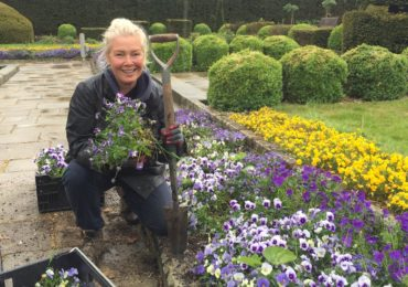 Violas & Pansies at Fanhams Hall